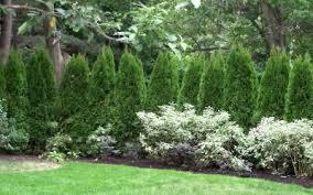 trees buy plants