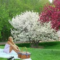 buy white flowering crabapple trees at best price plants