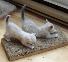 Cardboard Scratchers For Cats Ask A Vet How Do I Know What Scratching Post Is Best For My Cat