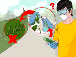 how to get rid of the whitefly 14 steps with pictures wikihow