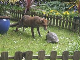 the fox and the tortoise s magical moment the argus