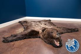 grizzly bear skin rugs furcanada