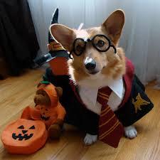Whats Costume Halloween U0027s Dog Halloween Costume Quiz Rover