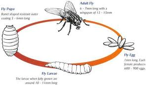 Backyard Fly Repellent 35 Ways To Get Rid Of Flies U0026 Keep Them Away Forever
