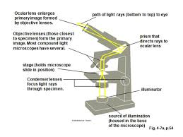 a light microscope image is formed by cells what is a cell simplest unit of life structural and