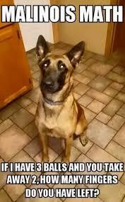 Orange Dog Meme - military service dog memes funny heartwarming photos thechive com