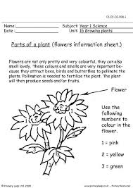 primaryleap co uk parts of a plant flowers information sheet