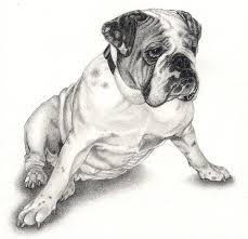 bulldog drawings bulldog puppy drawing by ferris cook bulldog