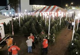 where to get your christmas trees and holiday decorations in los