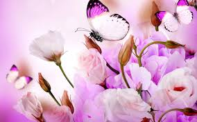 100 pictures of butterfly flowers 50 beautiful pictures of