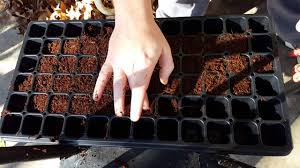how to start seeds with coco coir indoor gardening youtube