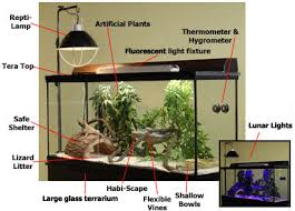 bearded dragon lighting guide habitat checklist bearded dragon housing