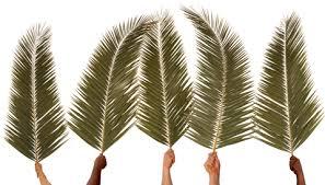 palms for palm sunday purchase palm sunday children s church lesson hosanna children s