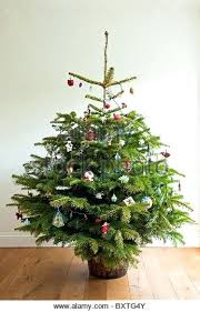 christmas tree prices real christmas tree a whole real decorated tree on a wooden floor