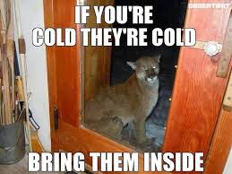 Funny Cold Memes - memebase cold all your memes in our base funny memes cheezburger