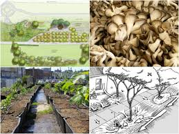 5 permaculture principles to help you start a garden 1 million women