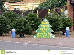 christmas trees for sale sign stock photo image 48520406