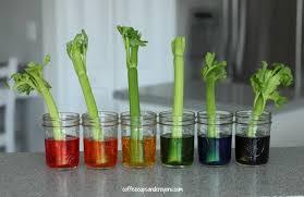 food coloring flower experiment worksheet nitrogen cycle worksheet