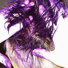 Halloween Hair Color Washes Out - yes you can dye your hair with food coloring here u0027s how food