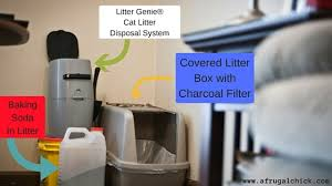 black friday litter boxes amazon litter box smell solutions