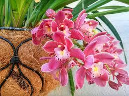 Gambar menanam alam botani Flora Budidaya Bunga tanaman