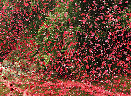 flower petals millions of flower petals erupted from a volcano covering an