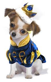 Chihuahua Halloween Costume Adorable Halloween Costumes Dogs Bossip