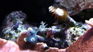 christmas tree worm rock slowly opening youtube