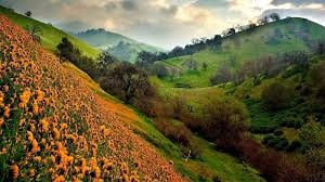 the valley of flowers wallpaper hd 2880x1800 wallpapers13 com