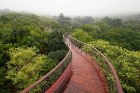 Kirstenbosch National Botanical Garden This Canopy Walkway Lets You Walk Above The Trees In Cape Town