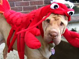 Lobster Costume In Lobster Costume