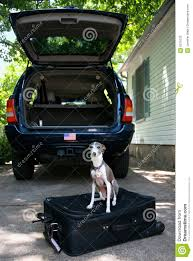 Pet Ready Exterior Doors by Ready To Go Dog On A Suitcase Royalty Free Stock Photo Image