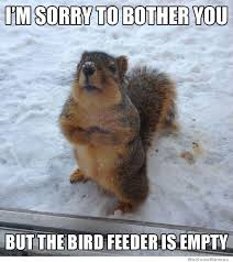 Dramatic Squirrel Meme - squirrel meme weknowmemes