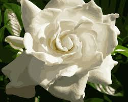 Gardenia Delivery Compare Prices On Gardenia Wall Painting Online Shopping Buy Low