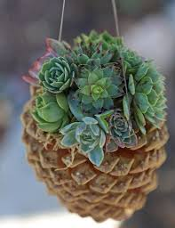 diy hanging pine cone succulent planter container gardening