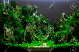 a beautiful planted tropical freshwater aquarium aquascaping