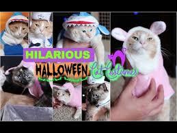 Halloween Costumes Cats Hilarious Halloween Costumes Cats