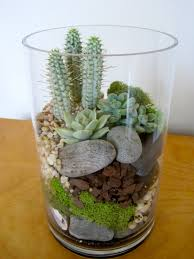 Low Light Succulents by Succulent And Cactus Terrarium With River Stones And Moss Inside