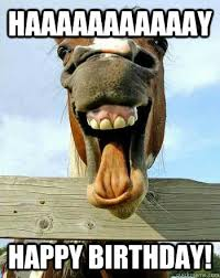 Horse Birthday Meme - click to enlarge write a comment or recaption pinteres