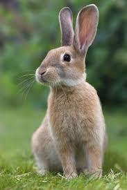 rabbit rabbit rabbit rabbit rabbit the sas honors program