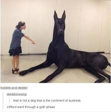 Great Dane Meme - she knows what s about to be up her ass assfister 101