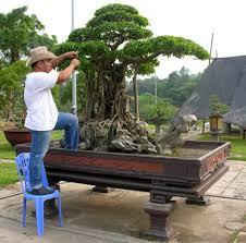 cay canh viet nam google search bonsai artists u0026 admirers