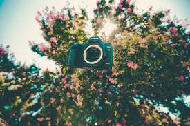 wallpaper bunga lingkaran gambar pohon cahaya kamera fotografi daun bunga hijau warna