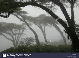 canopy of layered tree silhouettes on mavusa farm in vumba