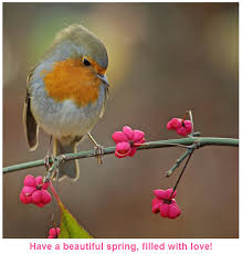 best wishes for my friends in beautiful bird picture