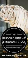 halloween horror nights busch gardens 2017 busch gardens tampa bay complete guide themeparkhipster