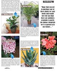 best plants for air quality lifetime good house plants 7 houseplants that will purify the air