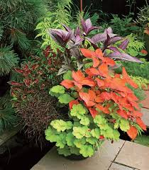Flowering Patio Plants Best 25 Container Plants Ideas On Pinterest Container Flowers