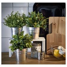 Herbs Indoors by Herbs Bringing Herbs Indoors For Fall Winter Glamour