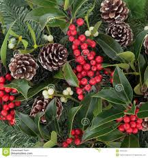 winterberry holly stock photo image 44087284